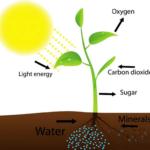Как увеличить урожай? Основа органического земледелия